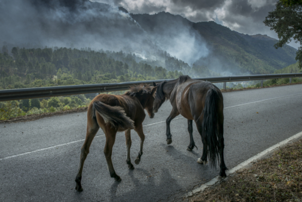 incendios-cabalos